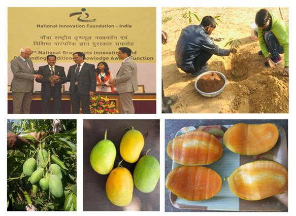 Kota farmer develops mango variety